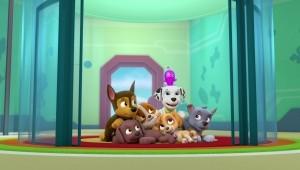 Os filhotes e os vegetais gigantes / Os filhotes salvam um brinquedo espacial, 1 h e 40 min