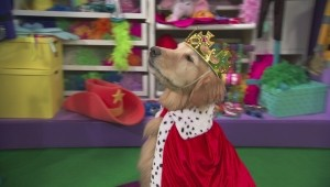 A Princesa e o Cone, 1 h e 40 min